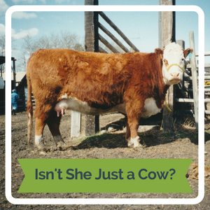 Isn't She Just a Cow?