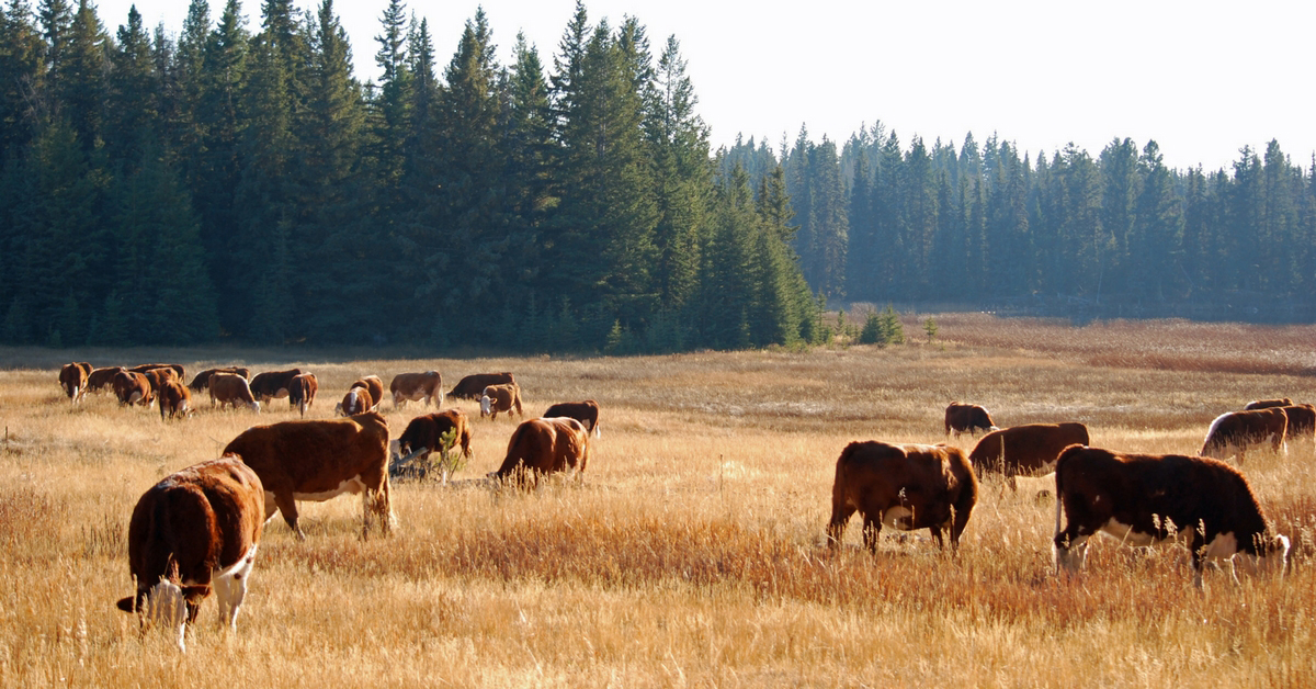 Day in the Life - October. Ranch Life | Cattle | Homeschooling | Unit Study | Fall Chores | Moving Cows | Plowing | Hayfields | Bonding Time | Herd Bulls | Routine |