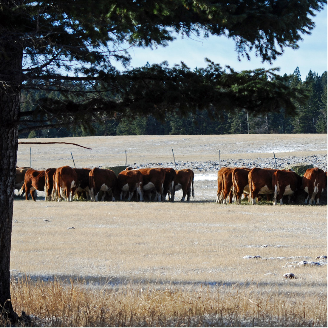 Day in the Life - November. Feeding | Beef Sales | Ranching | Ranching with Kids | Chores | Feeding Grain | Ranch Kids | Farming | Morning Chores | Agriculture