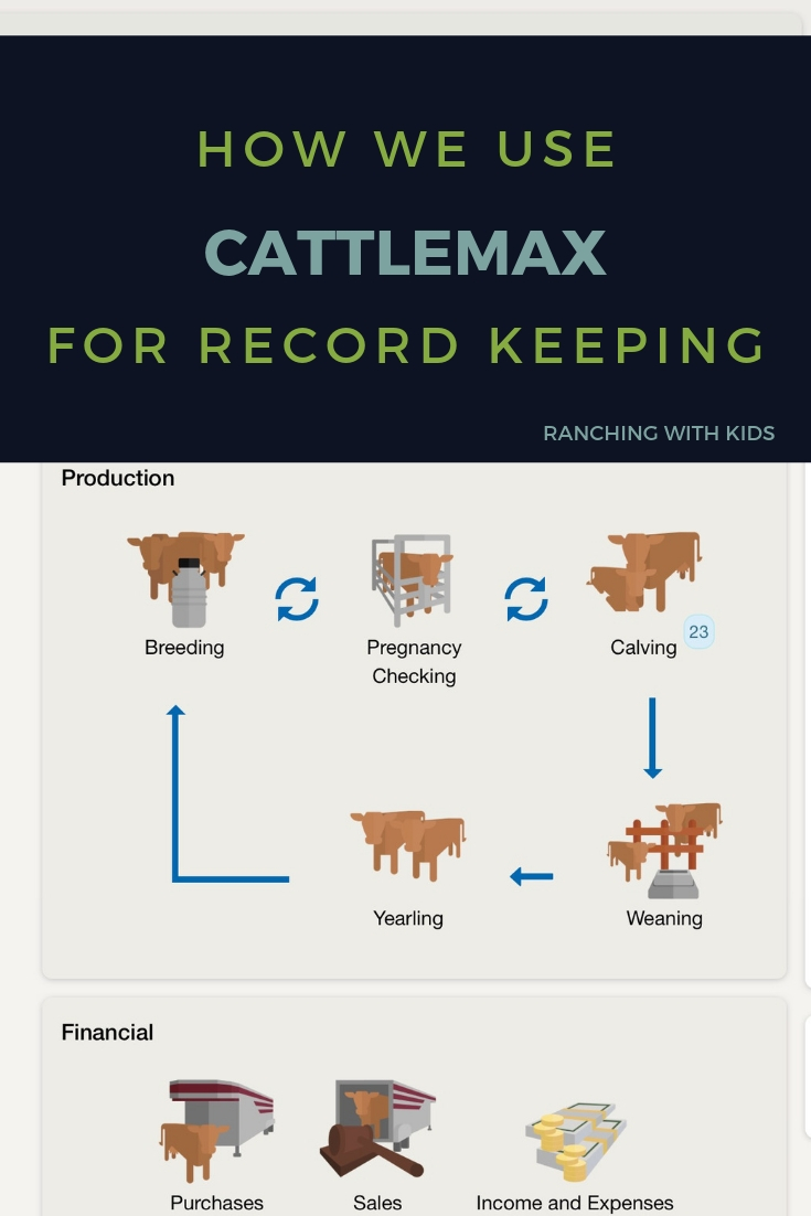 How We Use Cattlemax for Record Keeping. #cattlerecordkeeping #beefcattlerecordkeeping #cattlerecordkeepingcountrylife