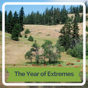 The Year of Extremes
