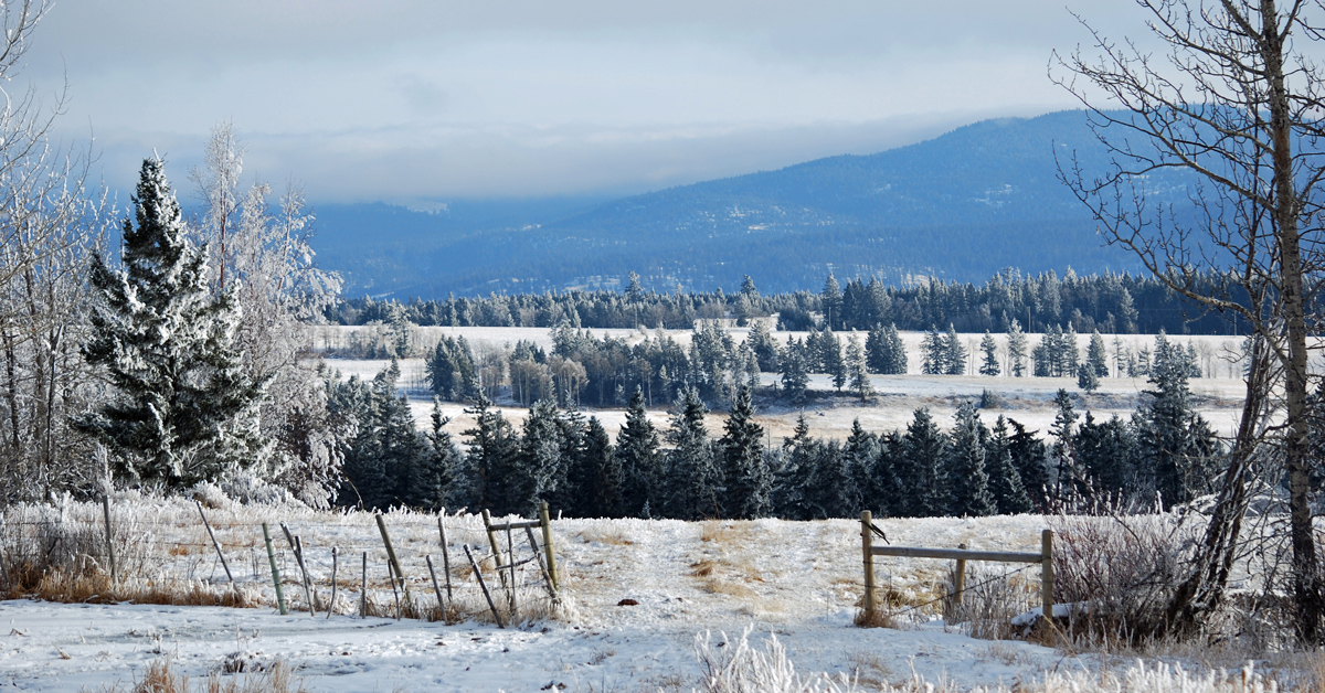 A gorgeous view on a beautiful day! Check out a day in the life for a homeschooling mom and rancher!