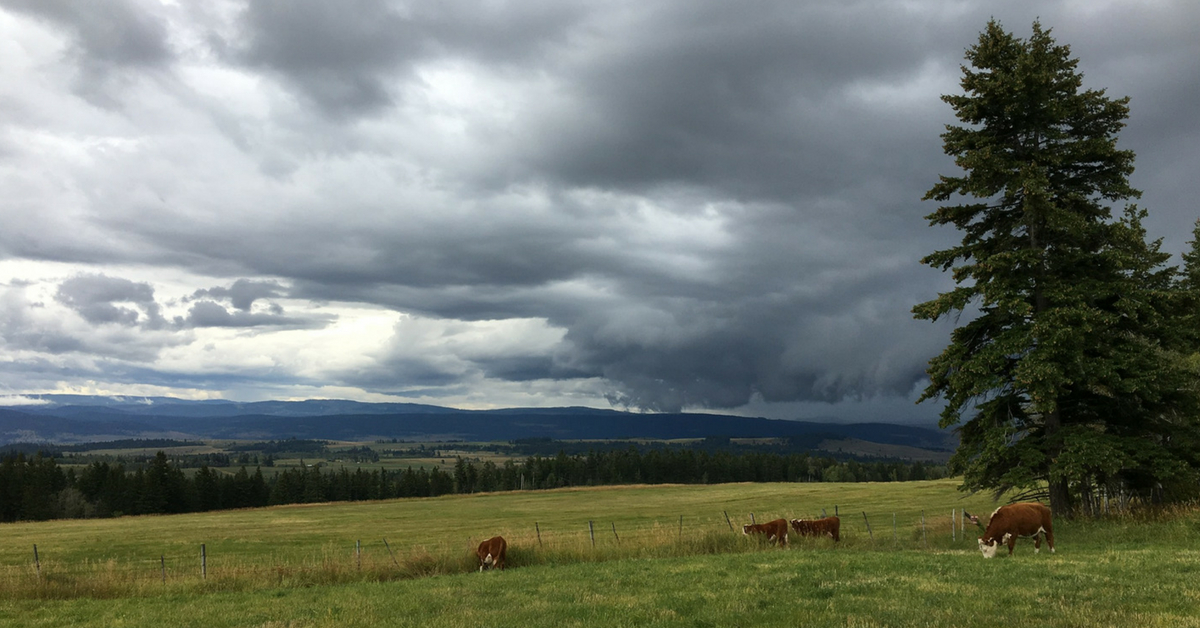 Watching the Storm Arrive. #ranching #ranchinglife #ranchingphotography