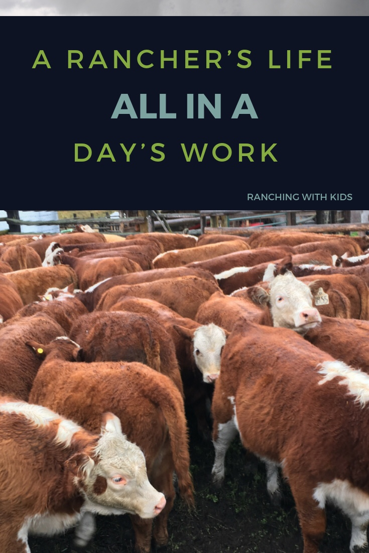 A Rancher's Life - All in a Day's Work. #raisingbeef #ranching #rancherlife