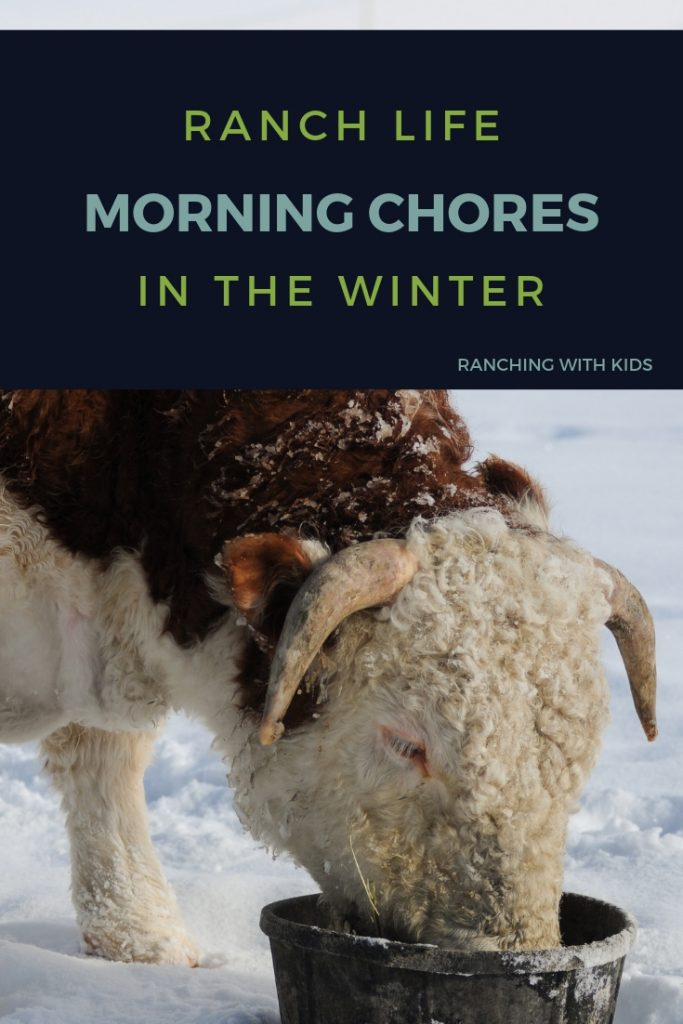 Morning Chores on the Ranch in Winter. #ranchlife #farmlife #countrylife