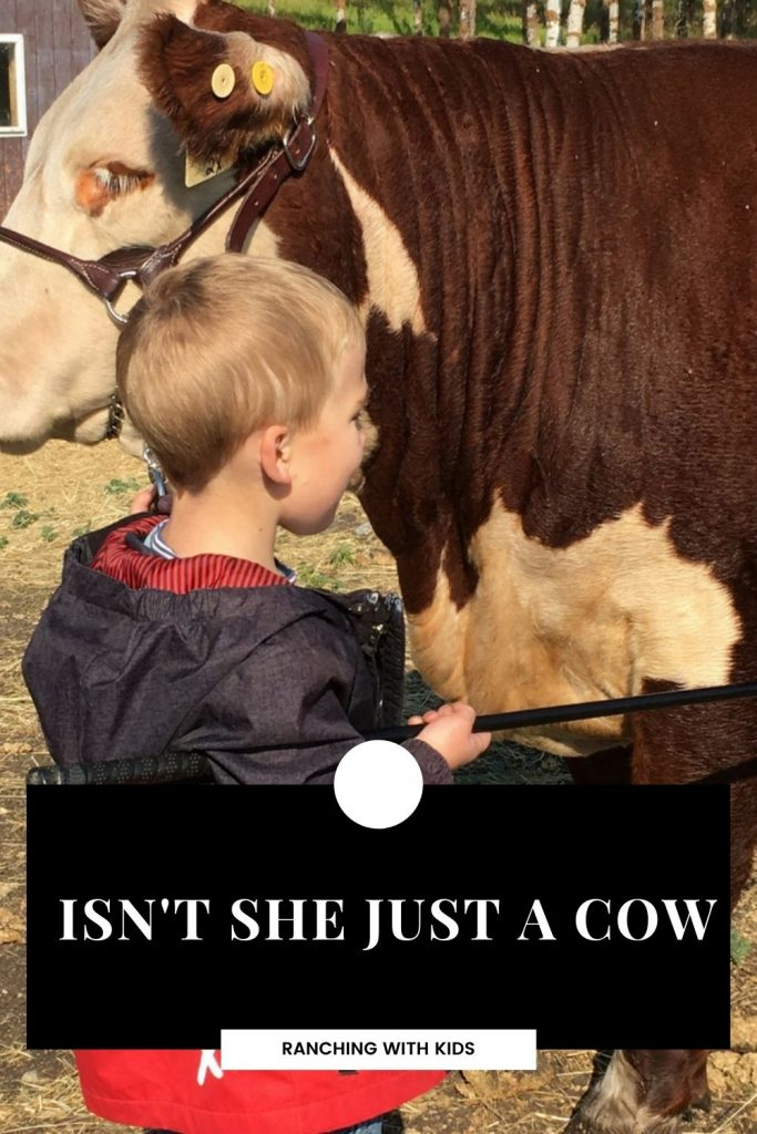 Isn't She Just a Cow? Some cows hold a special place in a rancher's heart. #cattleranching #cattle #cows