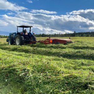 Swathing Hay During Haying Season