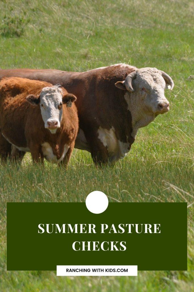 Summer Pasture Checks. #grasslands #pasture #cattleranching